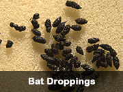 bat_droppings