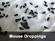 mouse_droppings