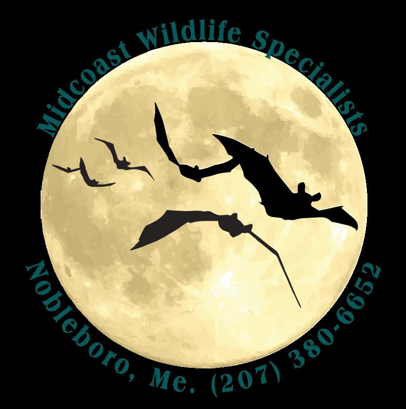 Midcoast Wildlife Specialists #1 Wildlife Control Experts