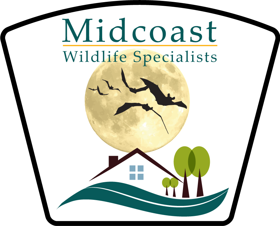 Midcoast Wildlife Specialists