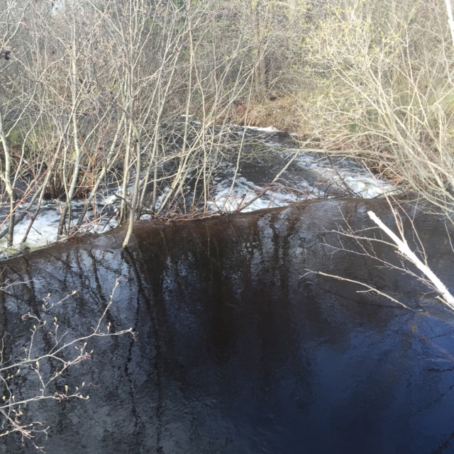 water over a beaver dam