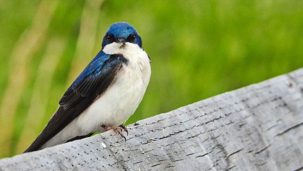 Birds. Sparrows.